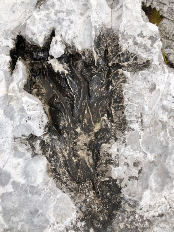 A distinct footstep of a dinosaur in the rock