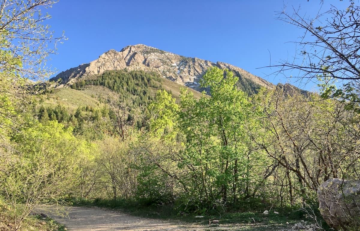 Mount Olympus Wilderness
