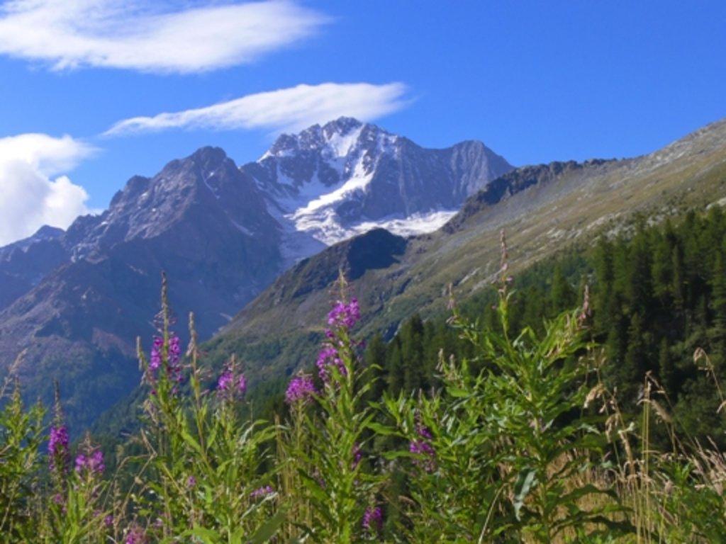 Photo №3 of Monte Disgrazia