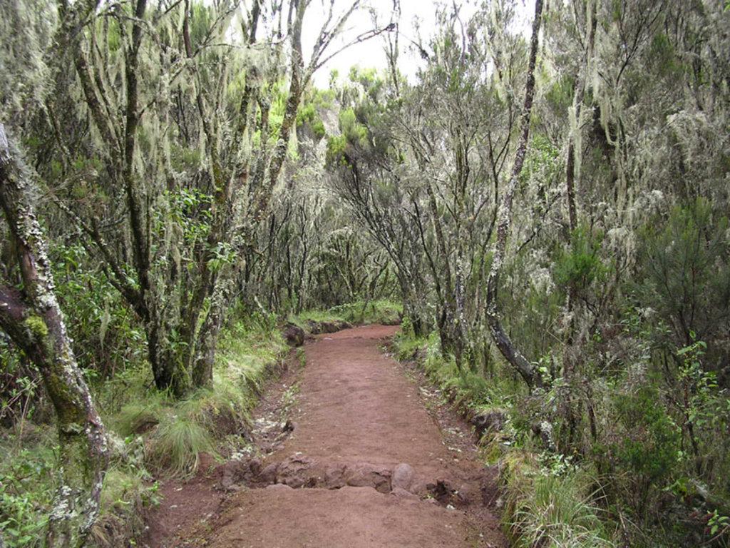 Photo №3 of Uhuru Peak