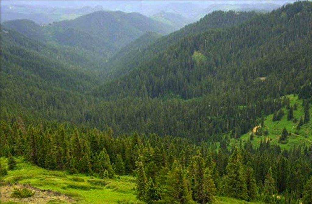 Photo №1 of Bohemia Mountain