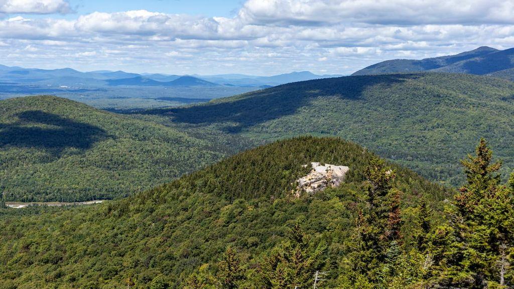 Nash Stream Forest