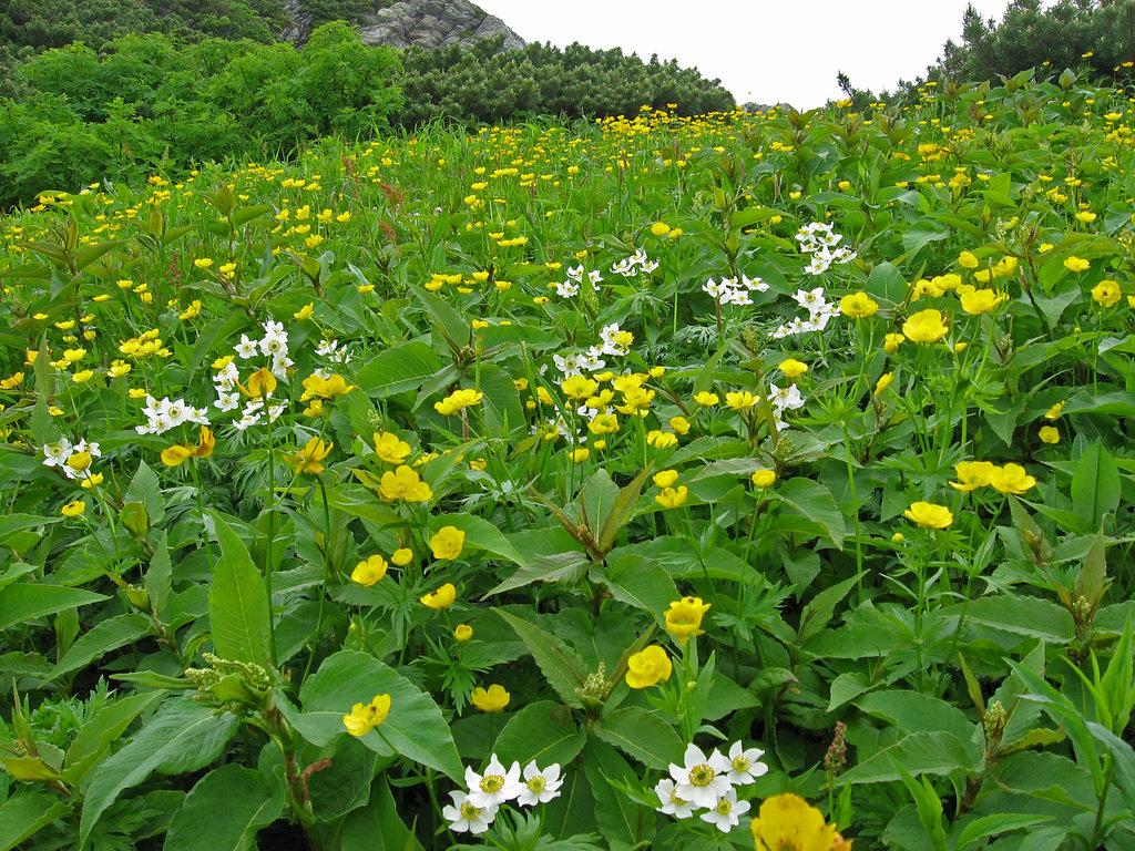 Photo №3 of Mt. Kitadake