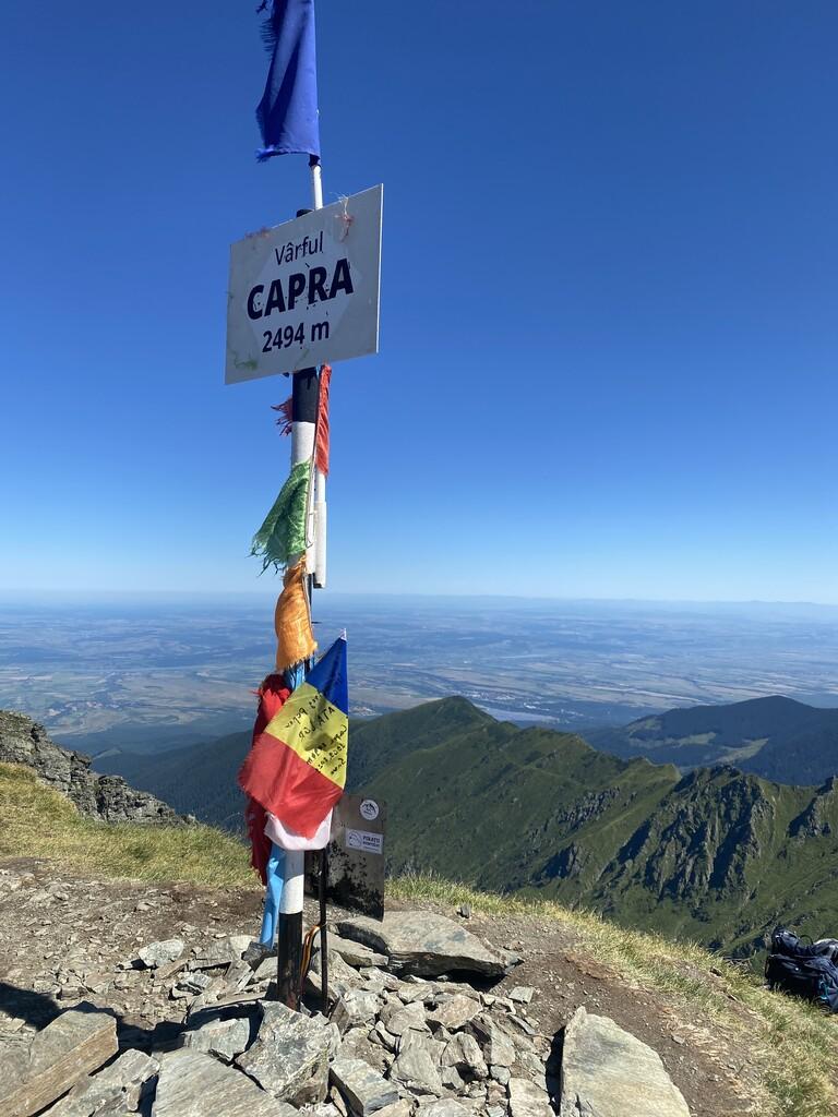 Capra image