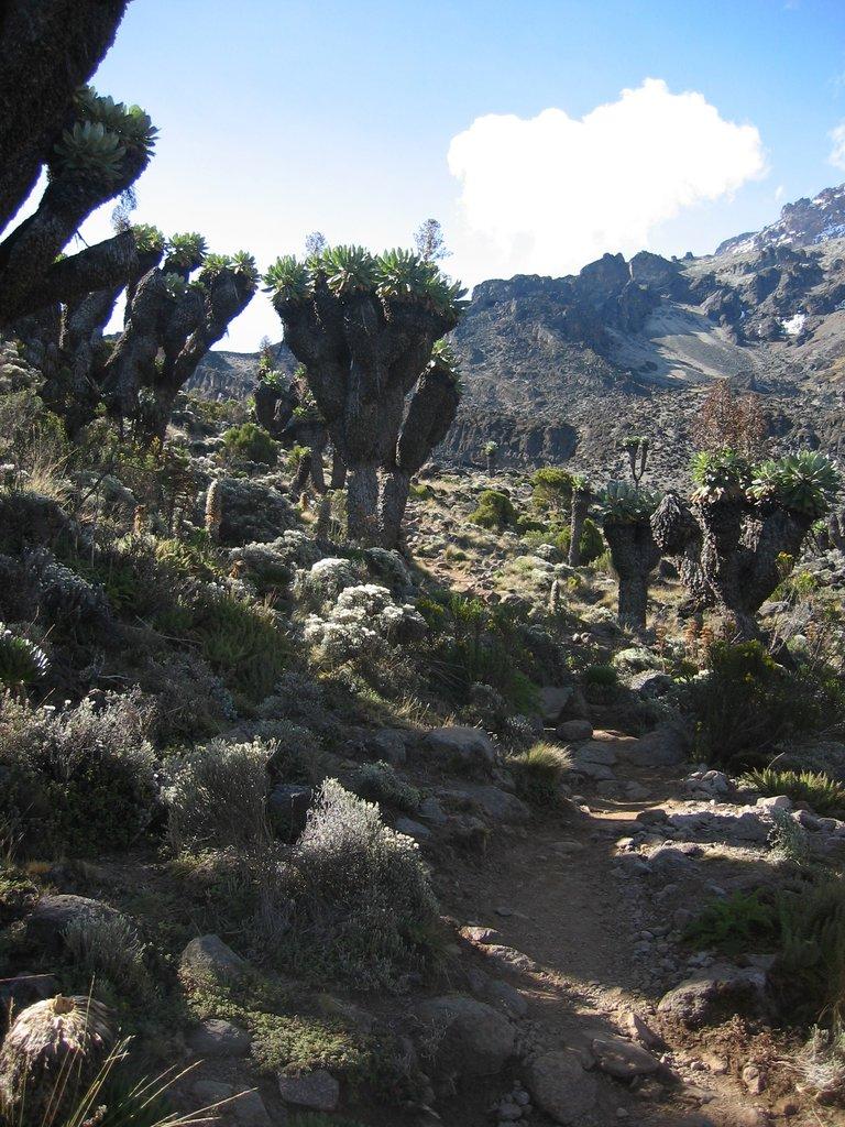 Photo №4 of Uhuru Peak