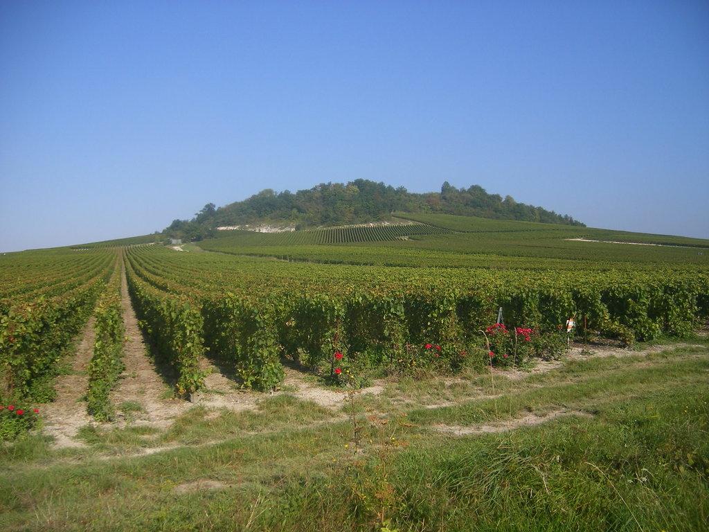 Photo №1 of Mont-Aimé